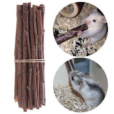 Pet Hamster Mice Gerbil Rabbit Molar Health Tooth Wood Apple Tree Branches