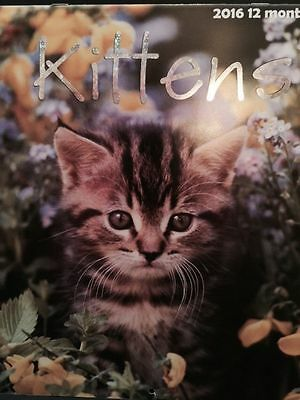 "Kittens 2016 12-Month Deluxe Wall Calendar. Full Color 12"" X 12""."