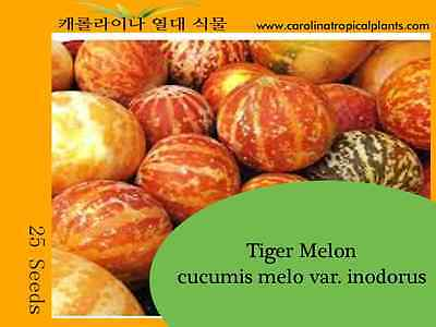 Tiger Melon - 25 Seeds