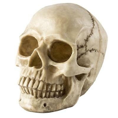 UK 1:1 Resin Lifesize Replica Realistic Human Skull Gothic Decoration Ornament