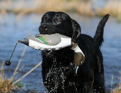 Avery Greenhead Gear Dog EZ Bird ATB Pintail Sprig Training Bumper Dummy