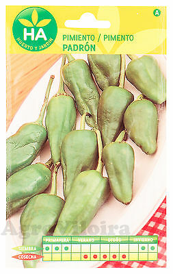 Spanish Padron Pepper - 300 Seeds - 2 Grams (0.07oz)