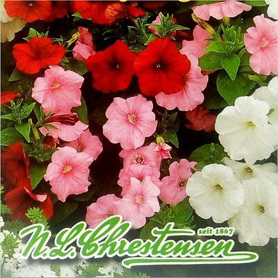 TRAILING PETUNIA (Petunia Pendula Balcony Mix) 80 seeds (#1247)