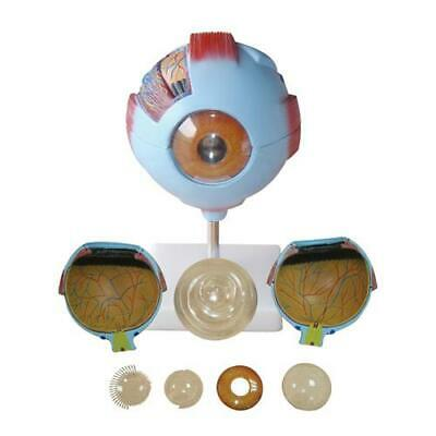 66fit Giant Eye Model - Anatomical Teaching Training Aid Models