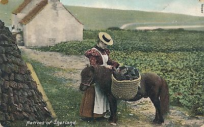 Natives Of Shetland Woman With Pony