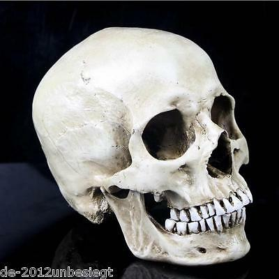 NEW 1:1 High Quality Skull Human Anatomical Anatomy Head Medical Model