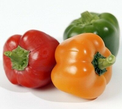 4 x CAPSICUM SWEET MIXED vegetable plants - seedling punnet