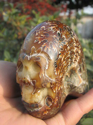 799g Natural conch carving skull+base