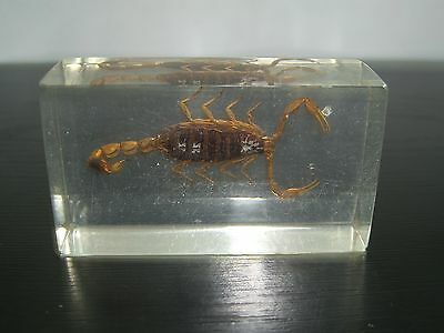 Deagostini Collection Real Bugs Unknown Scorpion Insect In Resin