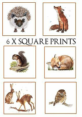 Set Of 6 Square Woodland Animal Wall Art Poster Prints (Choose Your Size!)