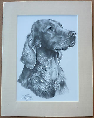 "Reduced - Irish Red Setter By Mike Sibley Art Card Dog Print Mounted 9 X 7"" Sale"