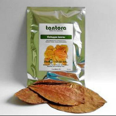 50x Tantora Dried Indian Almond Leaves for Shrimp, Betta and Discus (Size M)