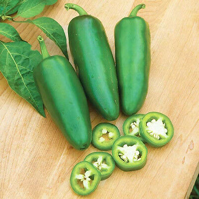 100 Jalapeno Chile Pepper Seeds Non Gmo Heirloom Vegetable Seeds Easy Plant