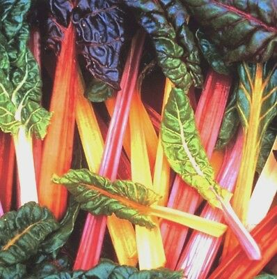 Vegetable Swiss Chard Rainbow 450 seeds Beat Leaf