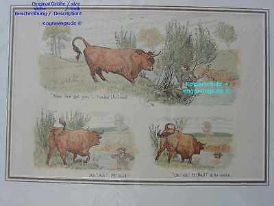 24920-Stier-Bull-Bulle----7 Alte Lithographie-Lithography---1885