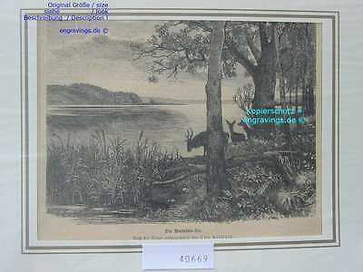 40669-Deutschland-Brandenburg-WEBELLIN SEE-TH 1880