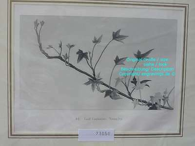 73050-Ruskin-Modern Painters-Malerei-Leaf Curvature Young Ivy-Stahlstich-Steel