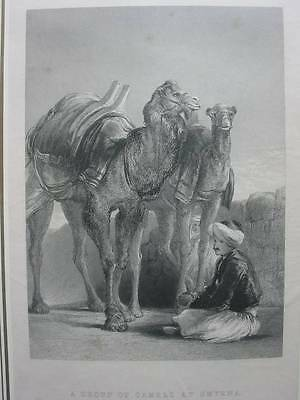 87426-Sir David Wilkie-A Group Of Camels At Smyrna-Izmir-Stahlstich-engraving