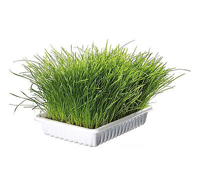Trixie Cat Soft Grass Dish 100g