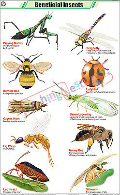 Beneficial Insects (58x90 cm) Wall Chart