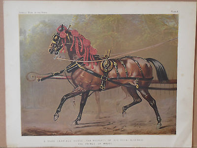 1876 Antique Print STATE CARRIAGE HORSE Prince of Wales - Chromolithograph