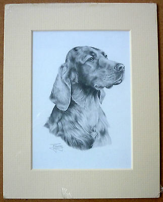 "Reduced Irish Red Setter By Mike Sibley Art Card Dog Print Mounted 8 X 6"" - Sale"