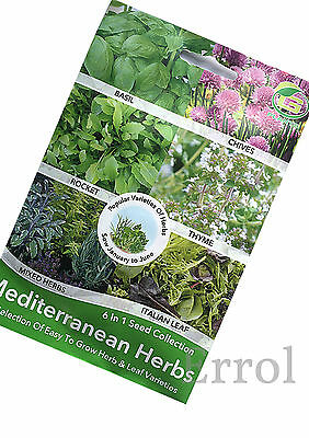 Herb Seeds 6 in 1 Collection Seeds. Basil Rocket Thyme  ect.