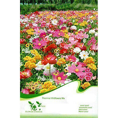 Flower Seed Shade Tolerance Wild Flowers Mix 200 Seeds Garden Yard Plant BF