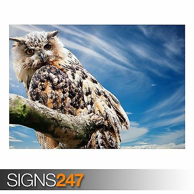 OWL (3338) Animal Poster - Photo Picture Poster Print Art A0 A1 A2 A3 A4