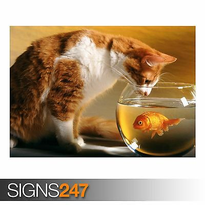 Picture Poster Print Art A0 A1 A2 A3 A4 Animal Poster 3434 CAT AND FISH