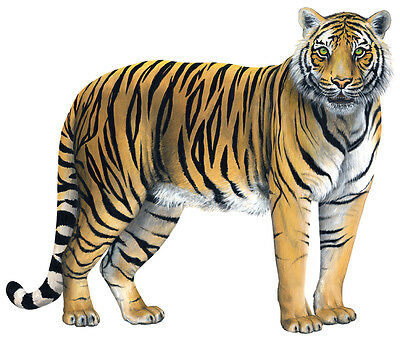 Tiger Wall Stickers Decals Giant Wildlife Mural