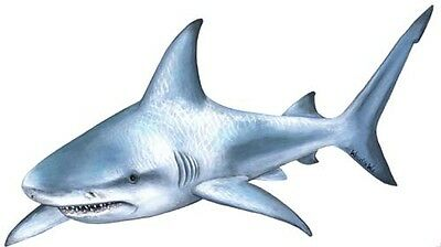 Shark Wall Stickers Decals Giant Wildlife Mural
