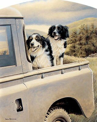 Nigel Hemming BACK SEAT DRIVER Border Collies On Landrover Land Rover Sheep Dogs