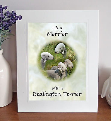 "Bedlington Terrier 'Life is Merrier' 10""x8"" Mounted Picture Print Dog Pet Gift"