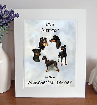 """Manchester Terrier 'Life is Merrier' 10""""x8"""" Mounted Print Picture Image Fun Gift"""