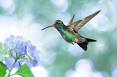 Beautiful Hummingbird Canvas Picture #14 Stunning Wildlife A1 Canvas Free P&p