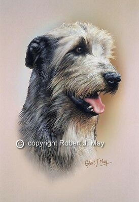 Irish Wolfhound Print by Robert J. May