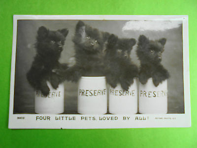 Four Little Pets Loved By All Post Date 1906 Puppy Dogs Real Photo Rotary Series