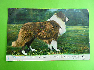 Post Card Collie Dog Picture Monarch Of All He Surveys Post Date 1906