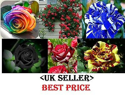 40xRare Multi-Colors Rainbow Rose Flower Seeds Garden Plant, Other Colors *UK*