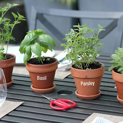 Garden Herb Labels - Ideal for Allotments, Window Boxes, Herb Pots, Greenhouses