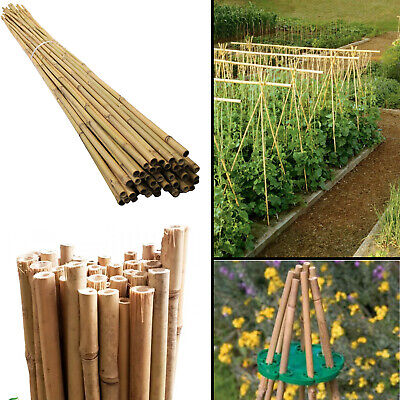 Extra Strong Bamboo Canes Garden Screening Thick Quality Plant Support Fencing