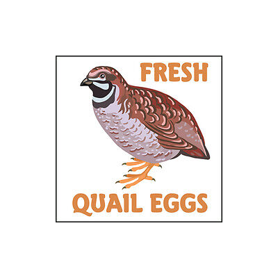 Fresh Quail Eggs Glossy Egg Carton Labels Set of 54