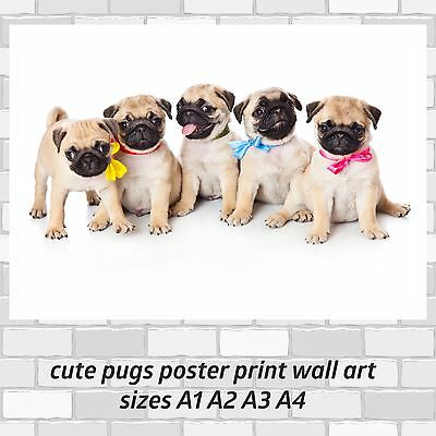 cute pugs puppy poster print wall art wall decor in sizes A1 A2 A3 A4