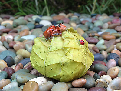 Miniature Dollhouse FAIRY GARDEN ~ MINI Frog & Ladybug on Cabbage ~ NEW
