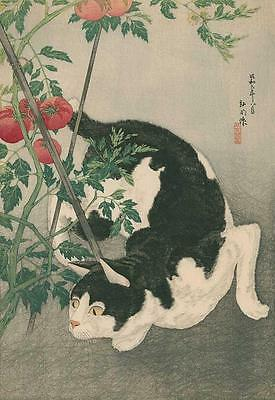 Cat, Tomato Plants, From Japanese Print By Takahashi Shotei, Magnet