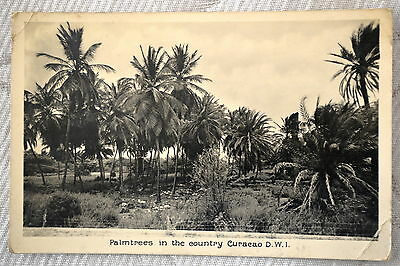 """CPA """" Palmtrees in the country Curaçao D.W.I."""