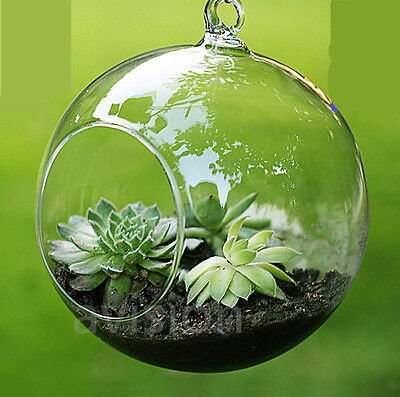 Clear Hanging Glass Flowers Plant Vase Stand Holder Terrarium Container Fish Pot