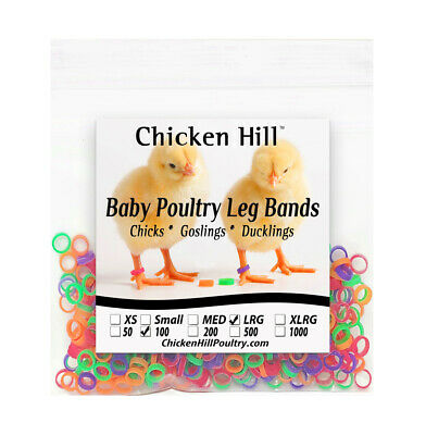 "200 Chick Leg Bands ~ 5/16""  Size 5 Poultry Chickens Ducks Geese Game Birds"