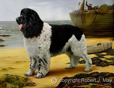 Limited Edition Landseer Newfoundland Print by Robert J. May